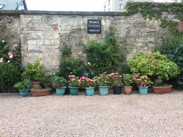 Flower pots by the wall next to the private parking space in the courtyard